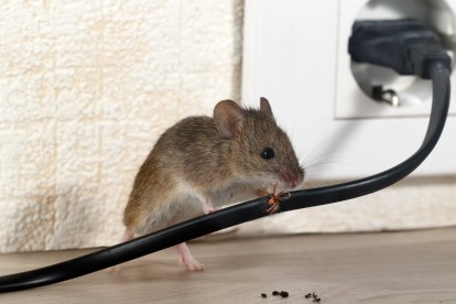 Pest Control in Hounslow West, Hounslow Heath, Cranford, TW4. Call Now! 020 8166 9746