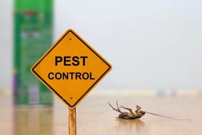 Pest Contol in Hounslow West, Hounslow Heath, Cranford, TW4. Call Now 020 8166 9746